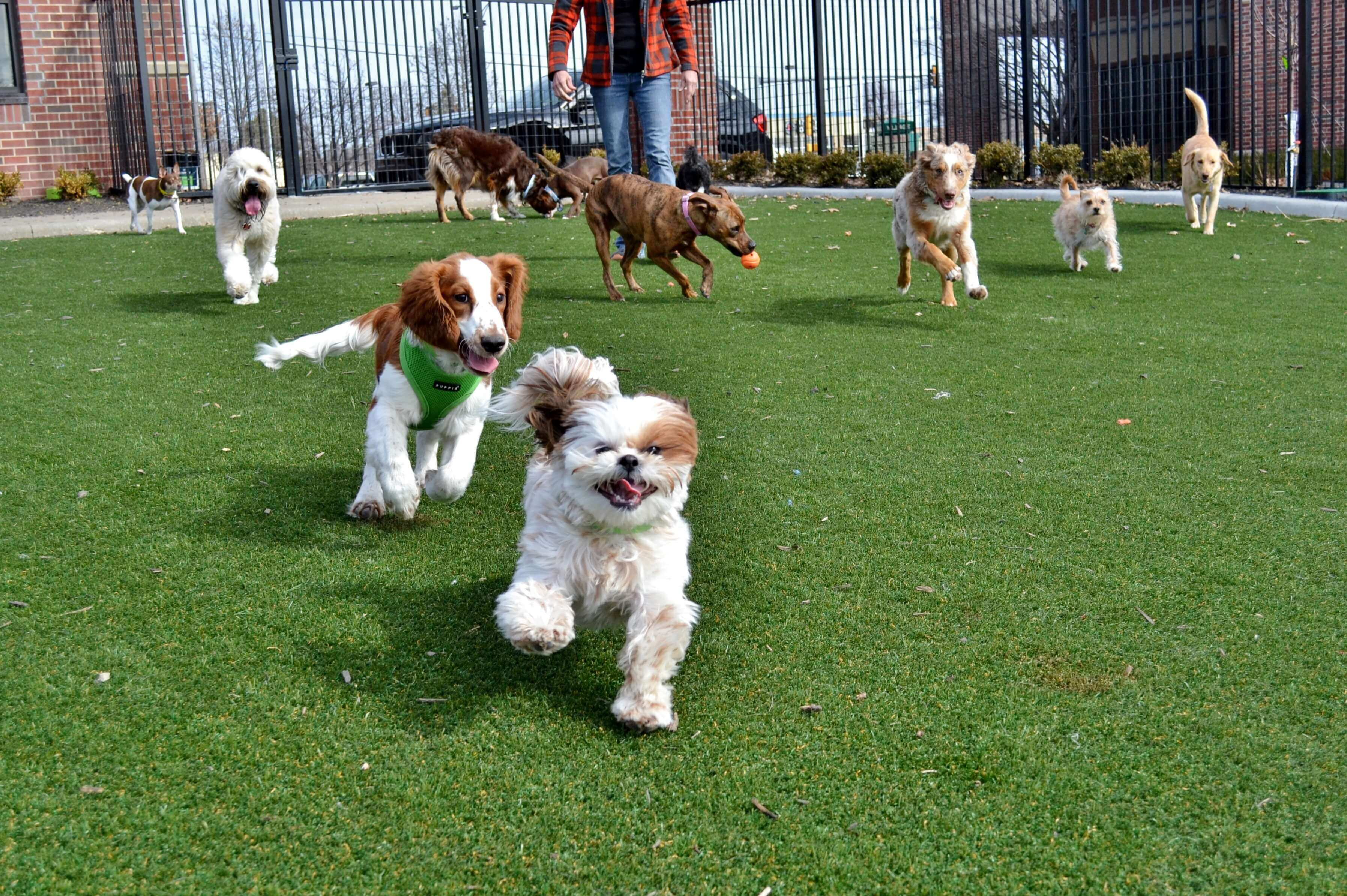 What You Need to Consider When Choosing a Dog Daycare?
