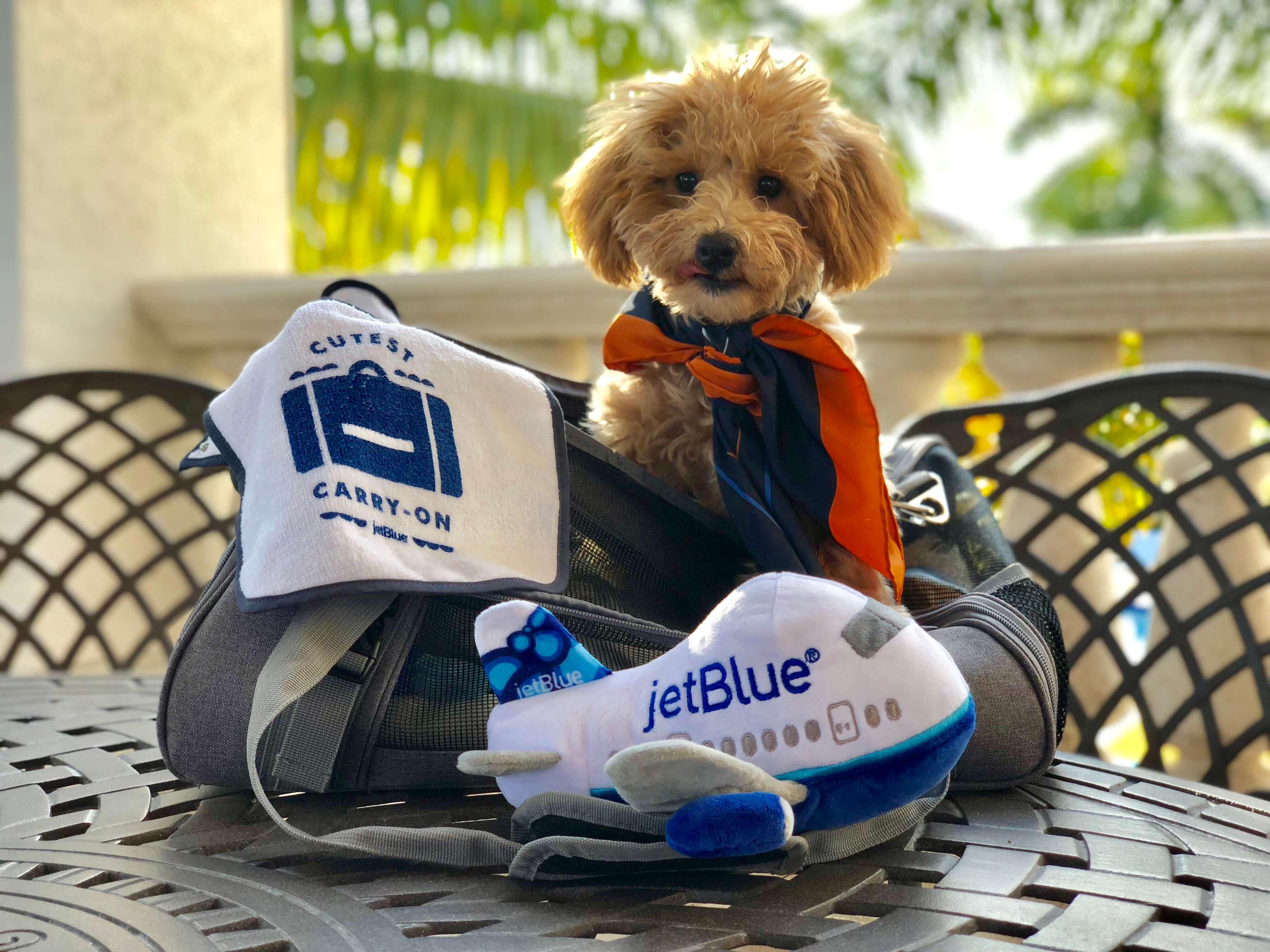 jetblue dog policy