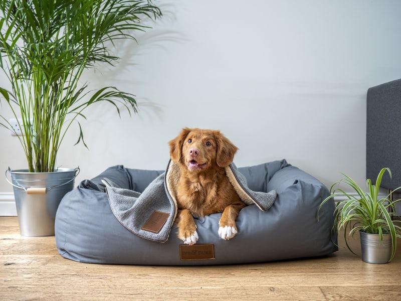 airbnb-service-dog