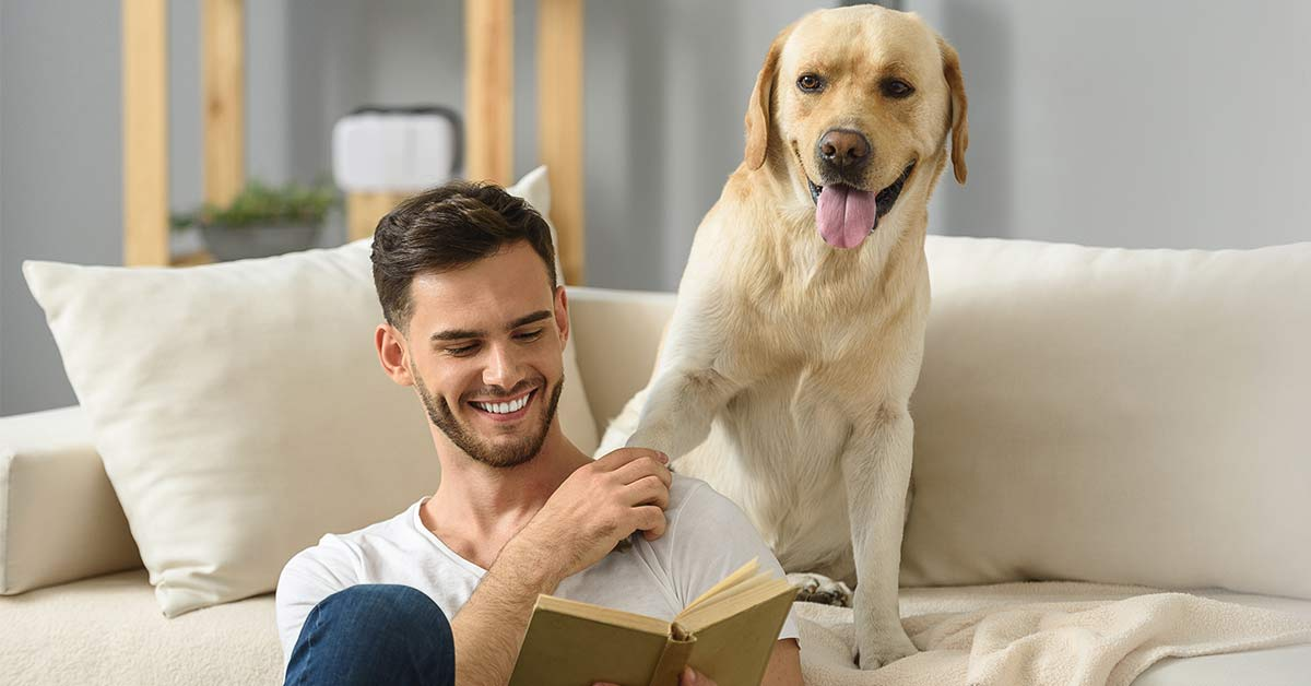 What Is The Difference Between A Psychiatric Service Dog