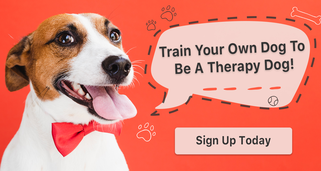 Therapy Dog Training Course
