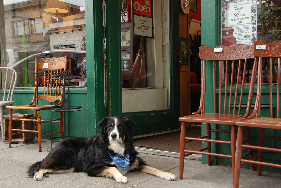 dog friendly stores