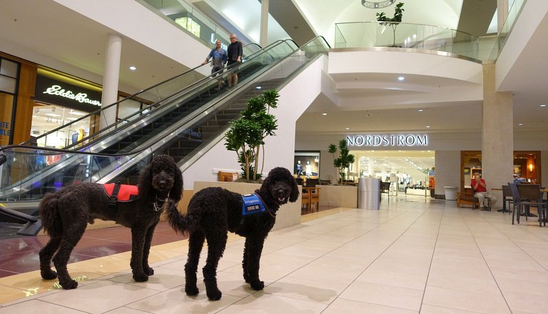 A Short Guide to Shopping with Your Dog and a List of Dog