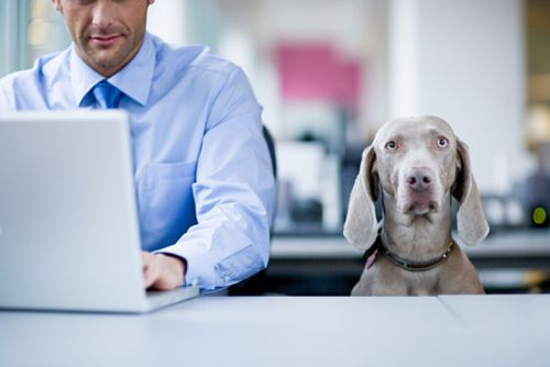 emotional support animals in the workplace