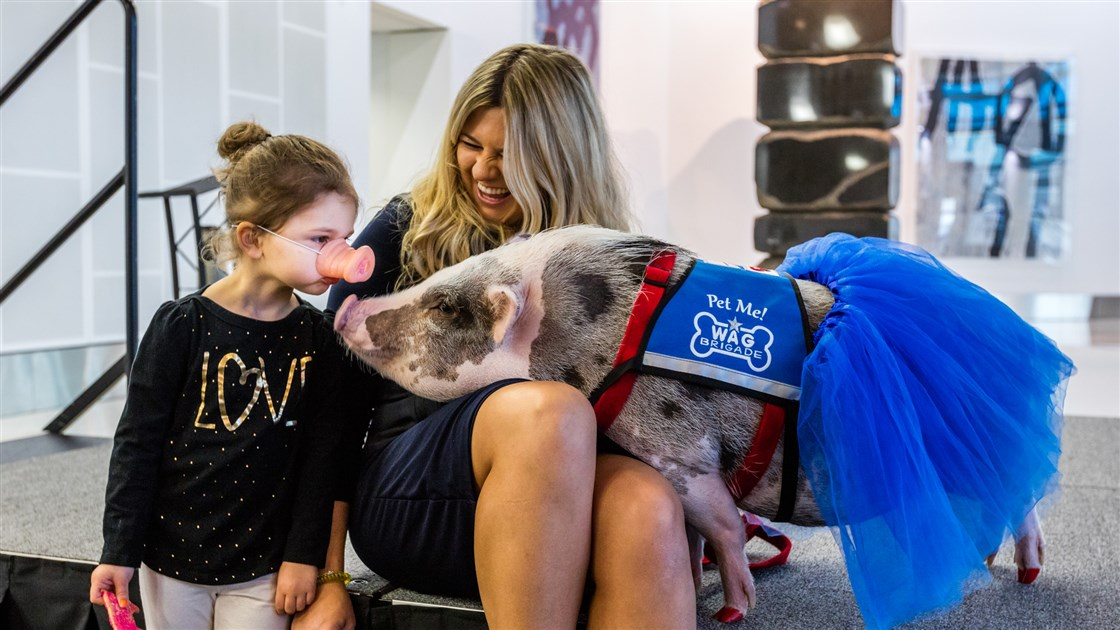 Emotional Support Pig San Francisco