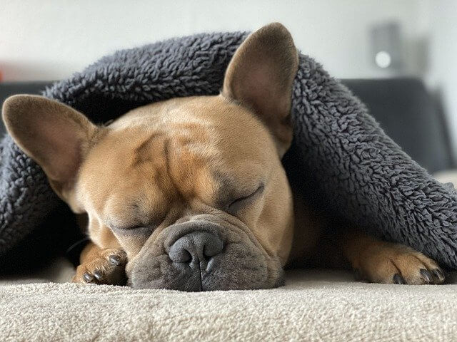 service dog for sleep disorder