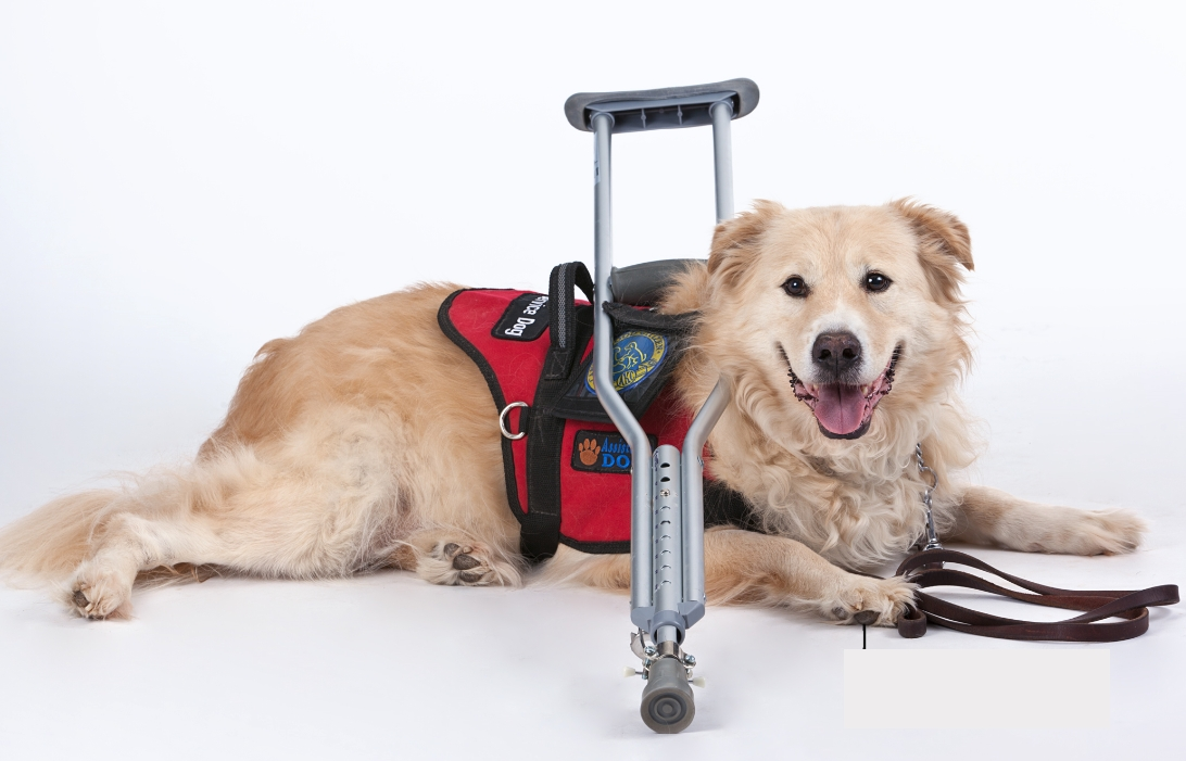 Can I Get a Service Dog Certification Online?