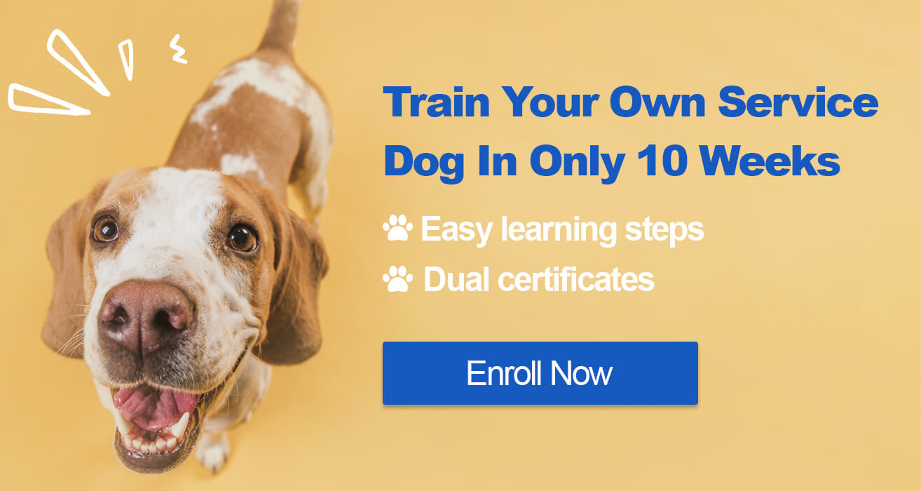 service dog training online