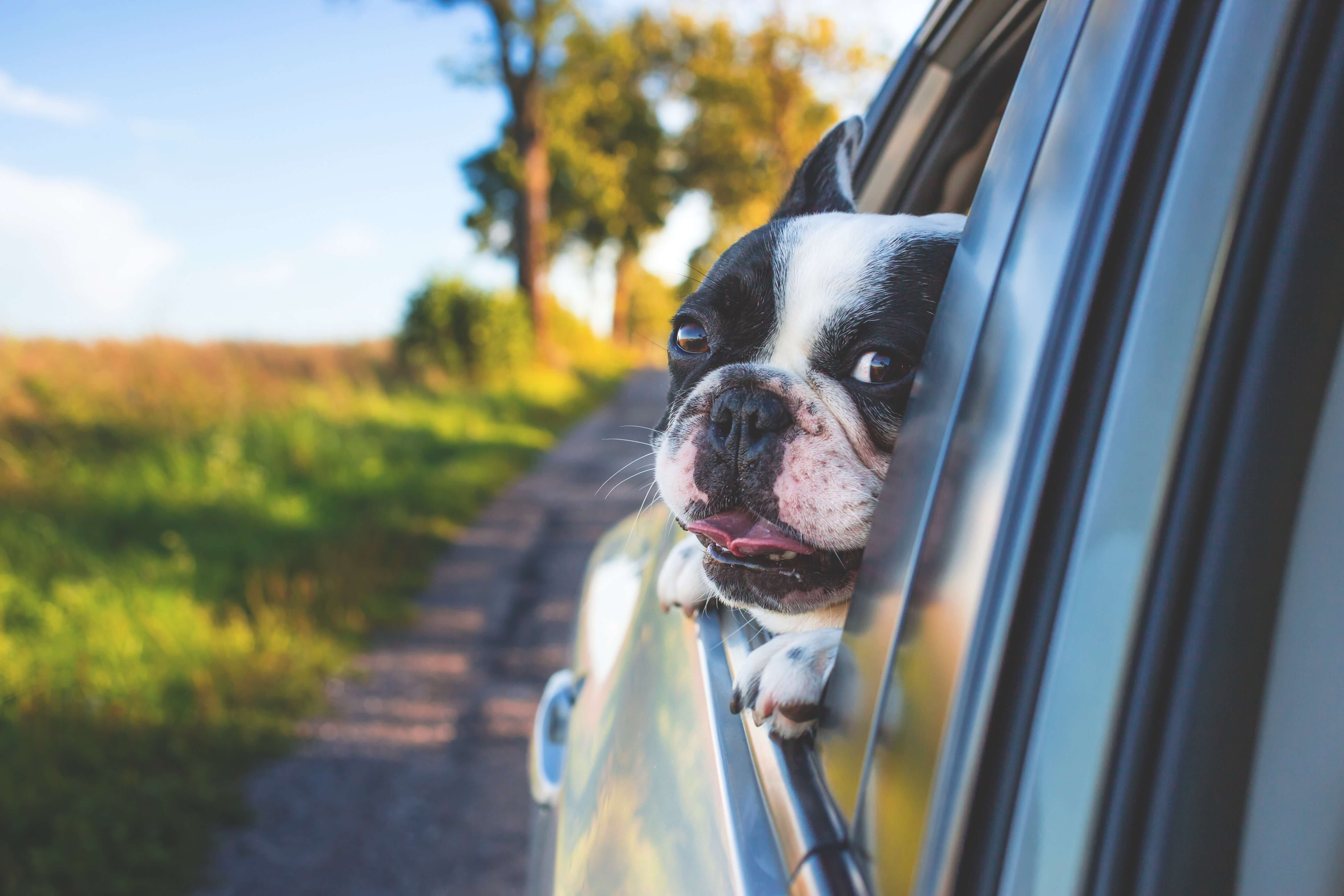 Five Stress Free Tips To Travel With Your Dog In Uber Or Lyft